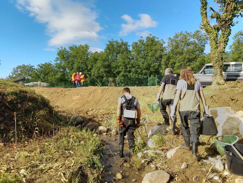 Travaux de restauration du Merdarei à Saint-Romans - pêche de sauvetage avant mise en assec - aout 2020 - UTSG_ SYMBHI
