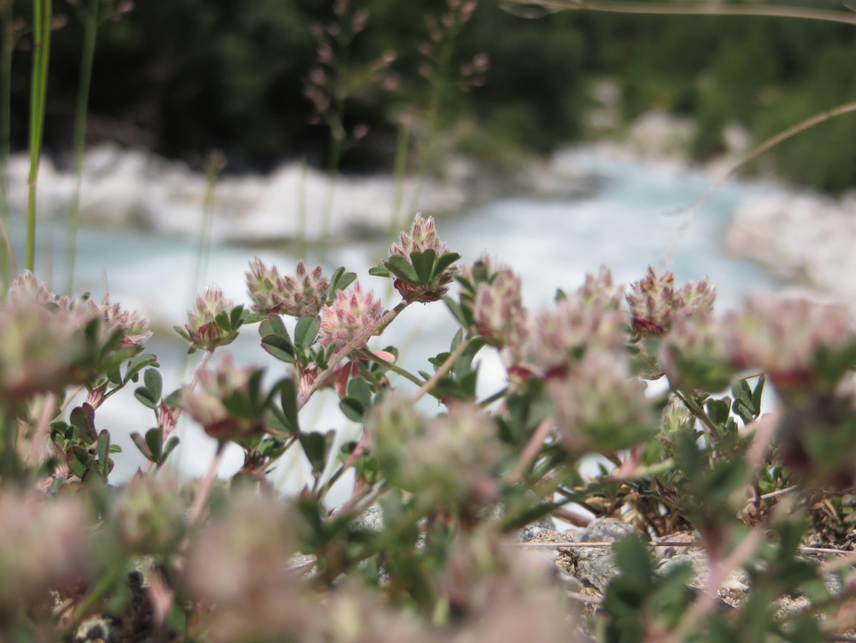 fleurs en macro avec rivière en arrière plan