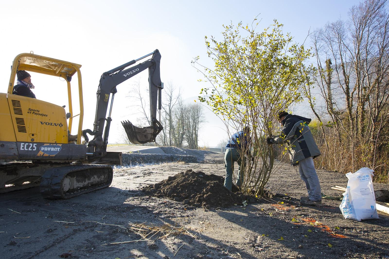 homme dans une pelle mécanique et autres hommes en train de planter des arbres